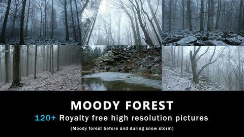 Moody Winter forest photopack