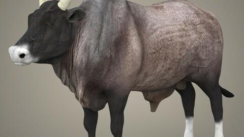 Realistic Ox 3D Model