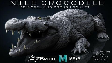 Production Quality Nile Crocodile 3D Model & ZBrush Sculpt