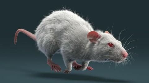 Rat Fur Animated White
