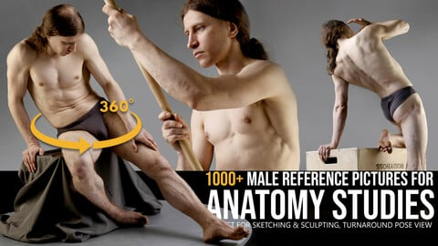 1000+ Turnaround Male Reference Pictures for Anatomy Studies