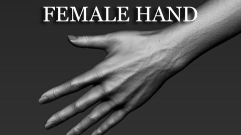 Realistic Female Hand
