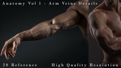 Anatomy Vol 1 -  Arm Veins Details