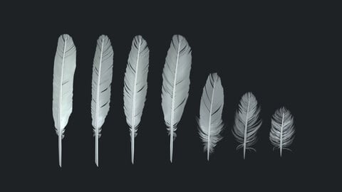 Birds feathers pack