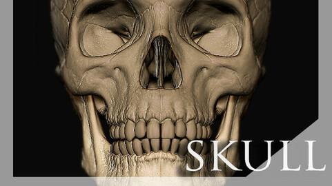 Skull Zbrush
