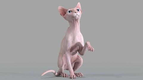 Sphynx Cat Pink Sitting Pose