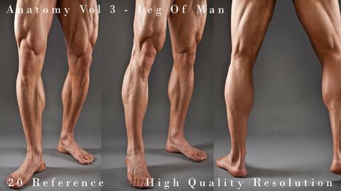Anatomy Vol 3 -  Leg Of Man Details