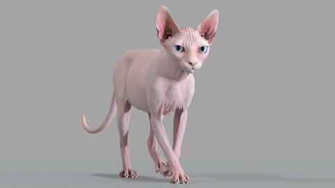 Sphynx Cat Pink Walking Pose