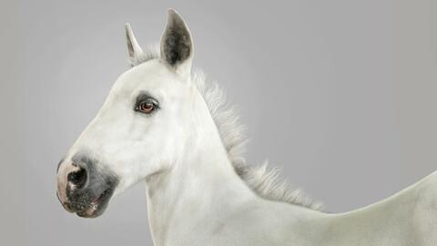 Horse Foal Fur White
