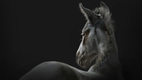 Horse Foal Fur Black