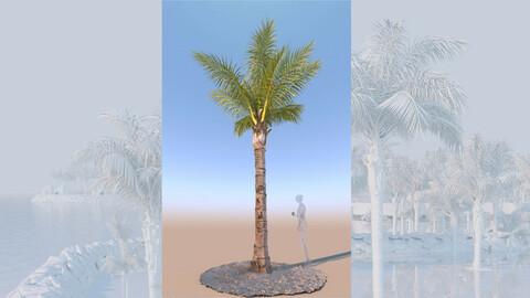 3D model of syagrus romanzoffiana queen palm mature b