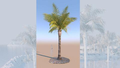 3D model of syagrus romanzoffiana queen palm mature a