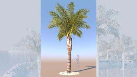 3D model of syagrus romanzoffiana queen palm mid a