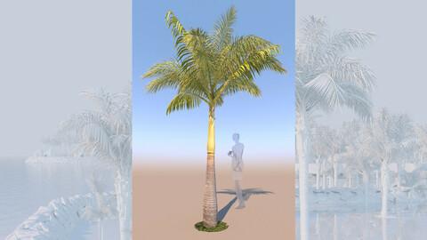 3D model of syagrus romanzoffiana queen palm mid c