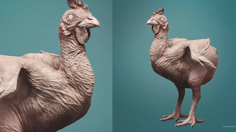 CHICKEN - sculpt/retopology/uvs