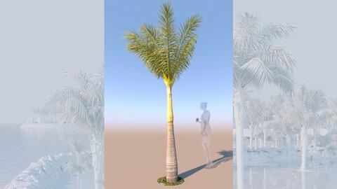 3D model of syagrus romanzoffiana queen palm young B