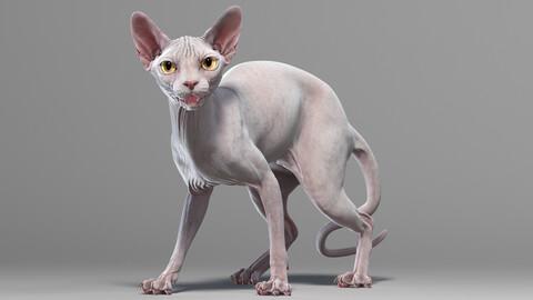 Sphynx Cat White Rigged