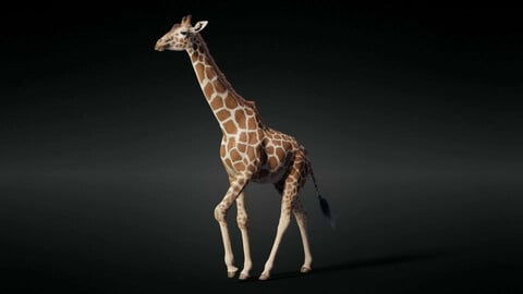 3D Animal | Giraffe Animated