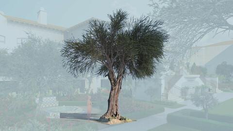 3D olive tree olea europaea mature a