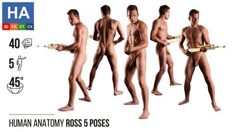 Human Anatomy | Ross 5 Various Poses | 40 Photos