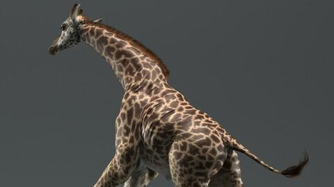Giraffe Masai Animated