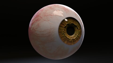 Photorealistic Eye with Pupil Dilation and Constriction 2.0