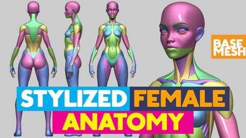 Stylized Female Anatomy base mesh