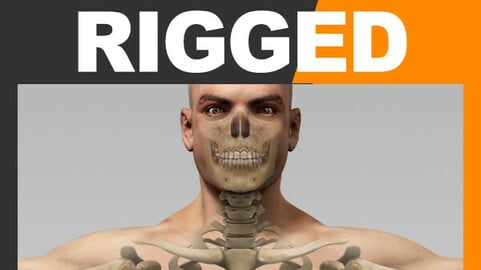 Human Male Body and Skeleton - Rigged Anatomy