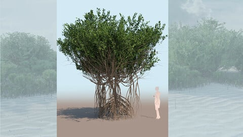 rhizophora mangle mangrove 3D tree a