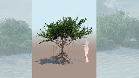 rhizophora mangle mangrove 3D tree c