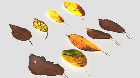 Dry Cherry Leaves Pack
