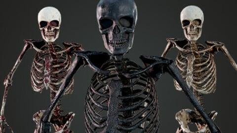 Skeleton Humanoid - Game Ready