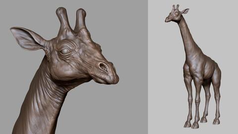 GIRAFFE - sculpt/retopology/uvs