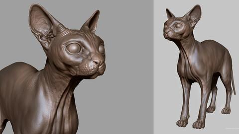 CAT - sculpt/retopology/uvs
