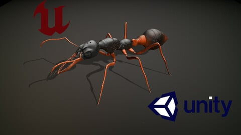 Ant Bulldog
