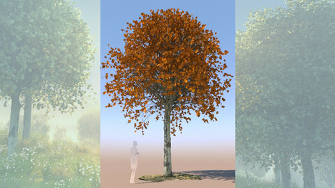 maple acer 3D tree mature autumn a