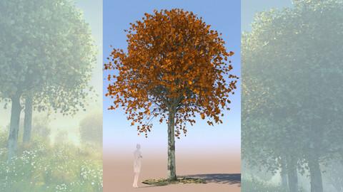 maple acer 3D tree mature autumn a