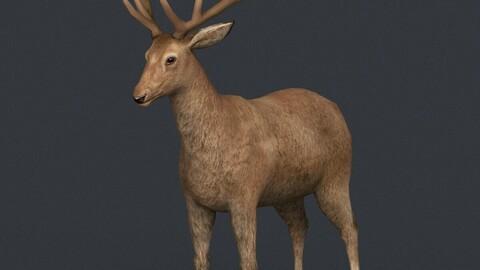 Realistic Deer