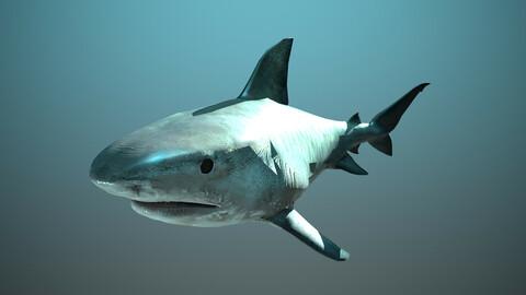 Tiger Shark - Rigging and Animation ( Maya & Blender )
