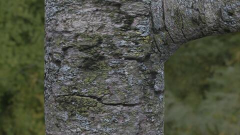 Tree Bark 6 PBR Material