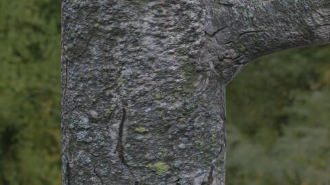 Tree Bark 9 PBR Material