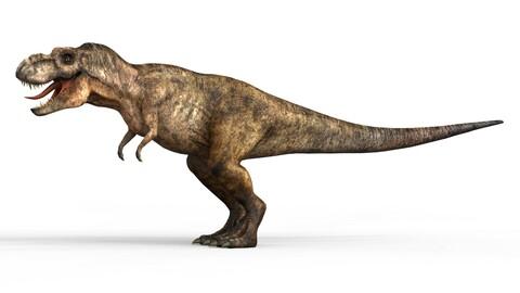 Realistic Trex Dinosaur 3D Model