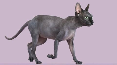 Sphynx Cat Black Animated