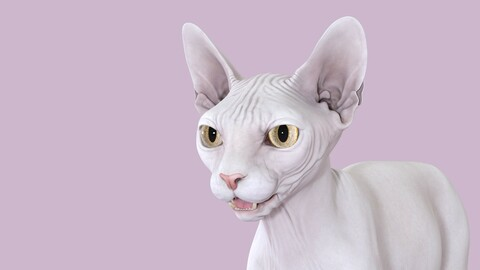 Sphynx Cat White