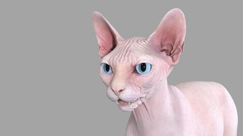 Sphynx Cat Pink