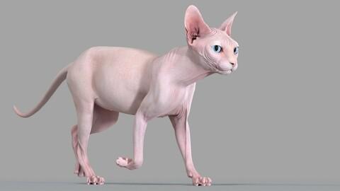 Sphynx Cat Pink Animated