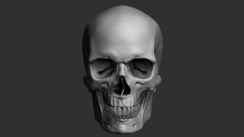 ZTL Skull Sculpt with subdivisions and UV's