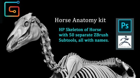 Horse Anatomy Kit (Skeleton)