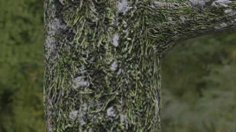Mossy Tree Bark 1 PBR Material