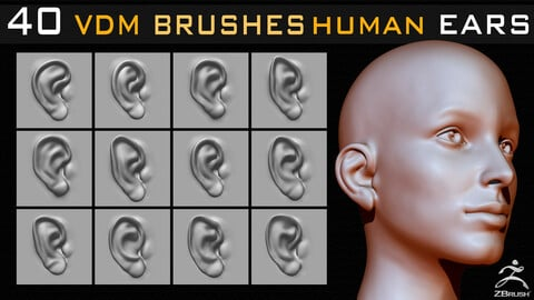 40 Zbrush VDM Human Ears Brushes